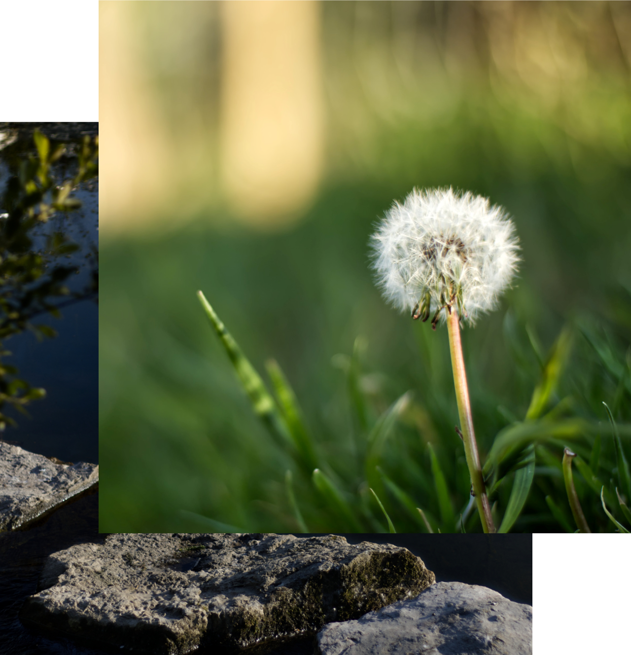 Flower and Rocky Waters